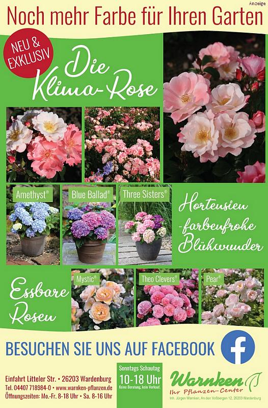 Pflanzencenter Warnken Anzeige Hortensien und Klima Rose